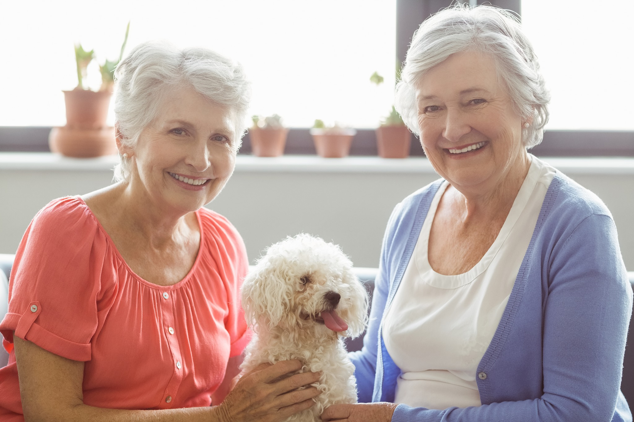Can a Four-Legged Friend Make Your Loved One's Golden Years Brighter?
